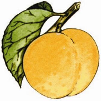 meruňka