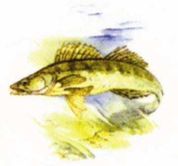 rybářské motivy